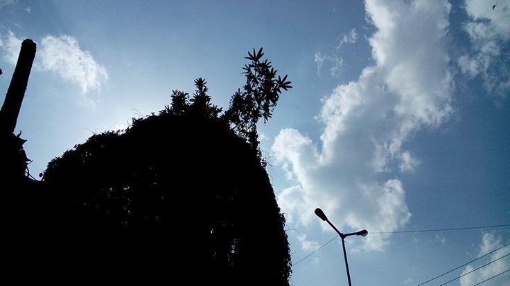 #_Weather@Udaipur
