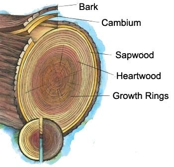 A Photo Of The Anatomy Of A Tree Nature Activities For