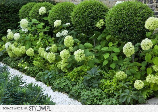 Hydrangeas, pushing their way to the front.