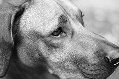 Dog | Flickr - Photo Sharing!