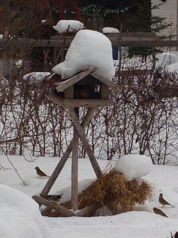 Lintujen ruokintaa