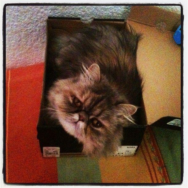 """""""Que #Aurorongo prefiera dormir en una caja de zapatos... #Priceless #NurseInABox"""""""