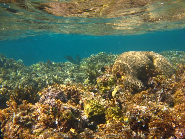 Coral Reef, Cat Island, Bahamas Island Life Pinterest