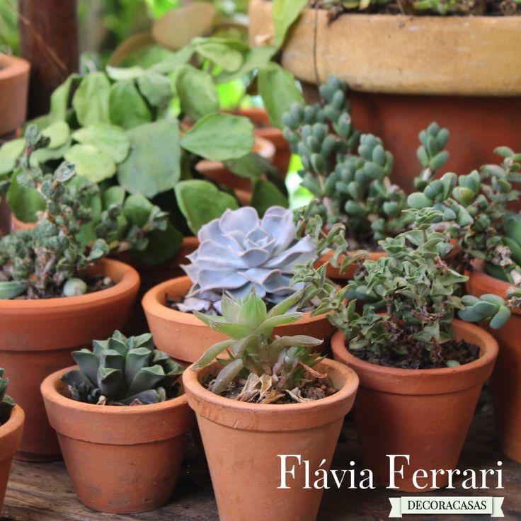 """Plantas suculentas são as novas """"queridinhas"""" da decoração e paisagismo. Eu mesma sou fã delas: muito resistentes, exigem pouca manutenção (poucas regas) e são muito versáteis. Já usei …"""