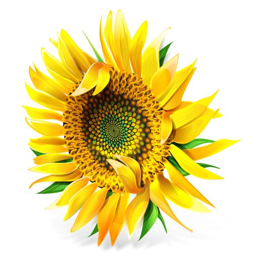 Free High-Quality Flower Clip Art: IconBug's Free Flower Clip Art