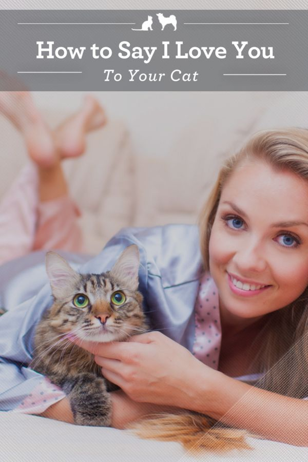 4c8316ef2df346643726076dd7f85fda - How Do You Get Your Cat To Like You