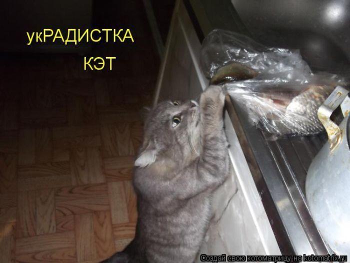 Картинки веселые кот ворует рыбу, поздравление
