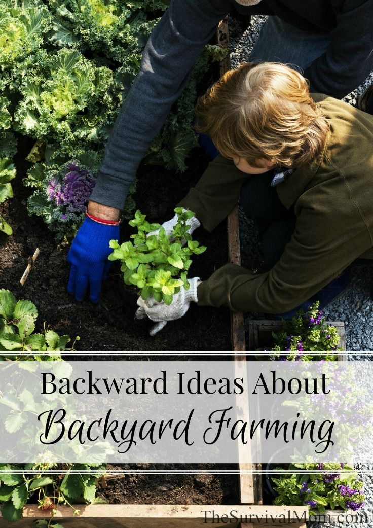 You can turn your backyard into a food producing landscape but you may need some help with simple backyard farming ideas. Here they are!