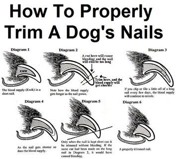 Dogs, A dog and Nails on Pinterest - 28.8KB