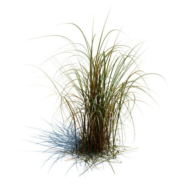 dead grass png Google Search Haunted house Pinterest : 4c8487f86f08ee5e79c80a9a67b31f57 adobe photoshop vector graphics from www.pinterest.com size 710 x 710 jpeg 56kB