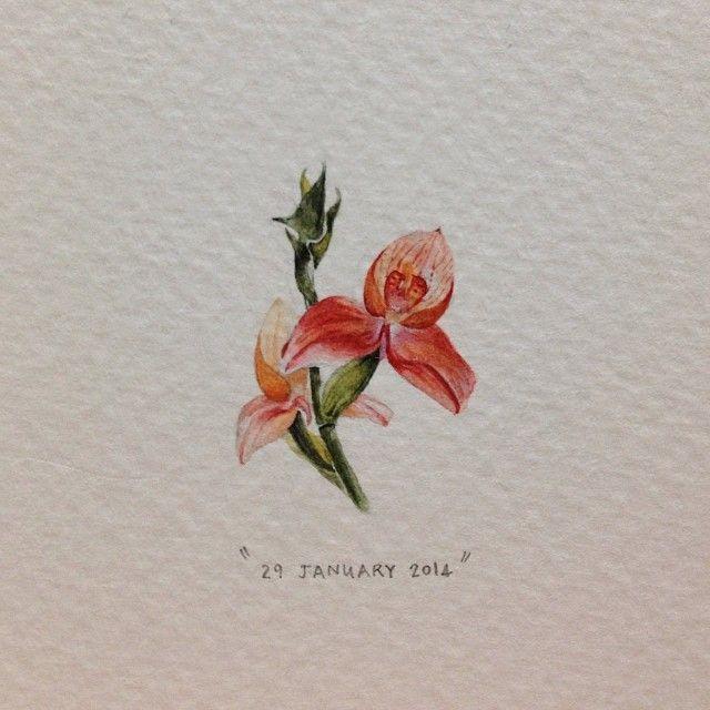 "Day 29 : Disa uniflora, or ""The Pride of Table Mountain"". 20 x 30 mm. #365postcardsforants #miniature #watercolor #wdc624 #disa #capetown"