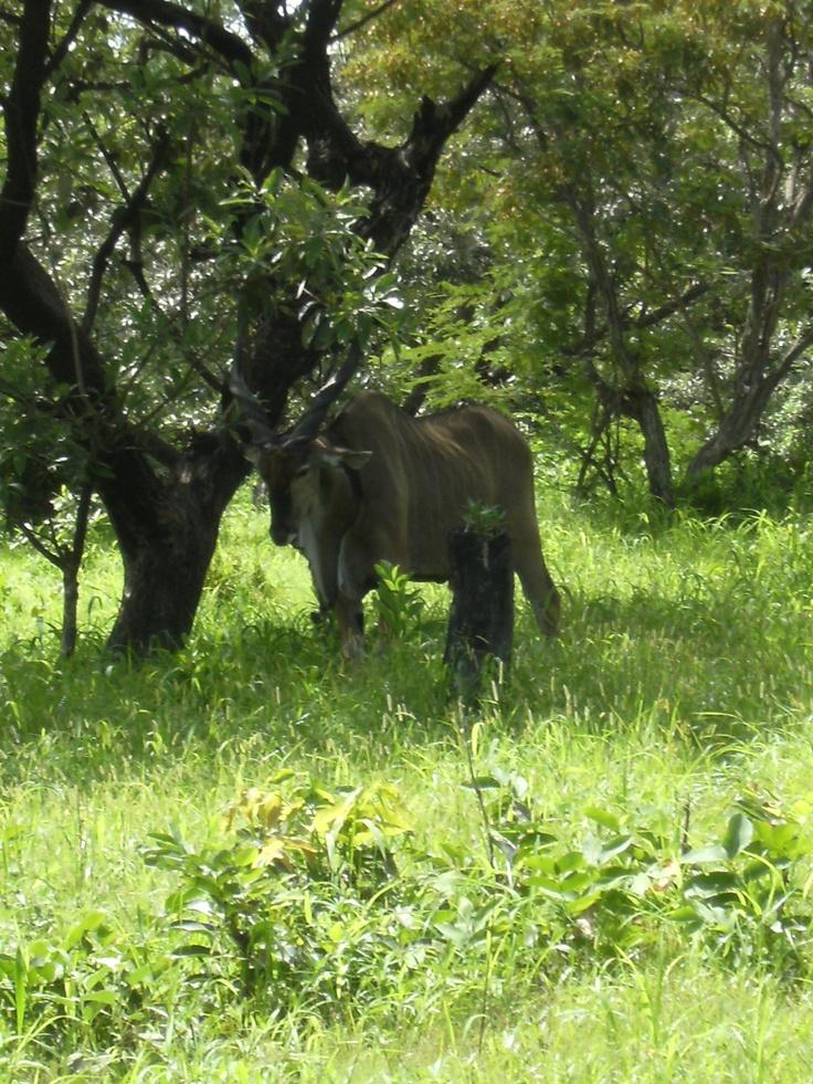 Antílop Safari Senegal