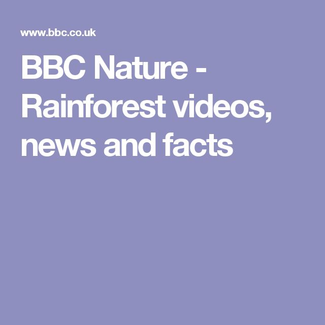 BBC Nature - Rainforest videos, news and facts