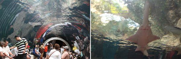Como é o Dallas World Aquarium, um aquário diferente