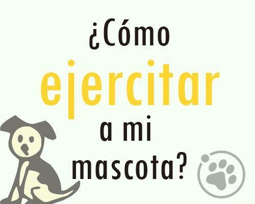 ¿Cómo ejercitar a mi mascota? https://www.facebook.com/notes/orbita-pets/amigos-orbita-petsc%C3%B3mo-ejercitar-a-nuestras-mascotas/548134635330163