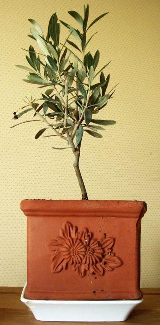 17 meilleures id es propos de jardin m diterran en sur - Arrosage basilic en pot ...