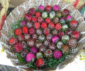 La Pitaya es una fruta muy similar a la fruta del dragon. Es el fruto de un cactus llamado pitayo, y sólo se disfruta por poco tiempo durante el año, lo que la hace más valiosa.