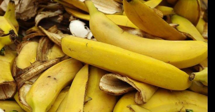 El proyecto buscó darle un valor agregado a los residuos a partir de fibras y celulosa del pseudotallo de la planta del plátano para reducir el impacto ecológico