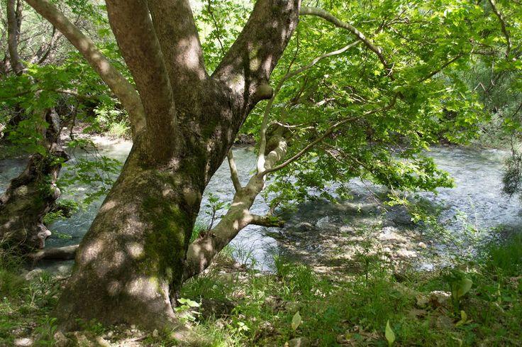 Acheron Springs - The River