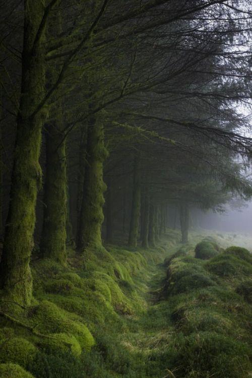 renamonkalou:  Forest of FleetCairnsmore of Fleet ~ Galloway Forest Park ~ Scotland  by Tom Pitman