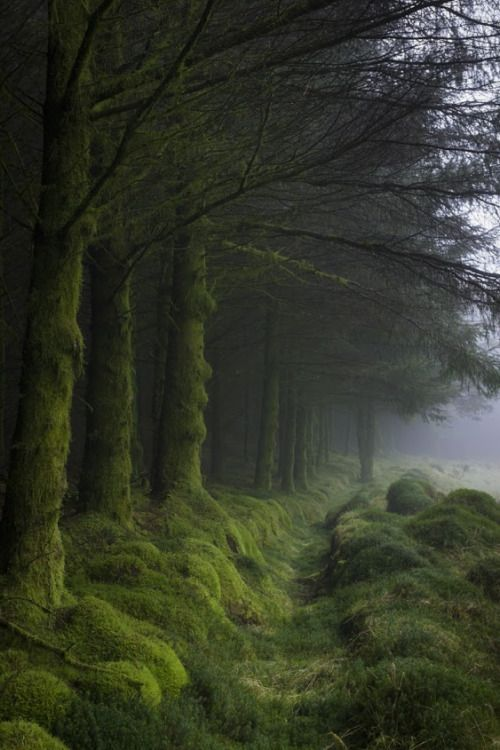 renamonkalou: Forest of Fleet Cairnsmore of Fleet ~ Galloway Forest Park ~ Scotland by Tom Pitman More