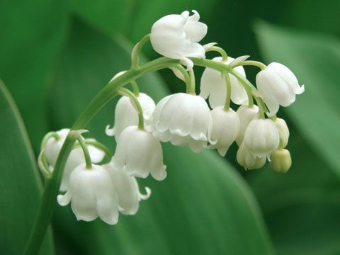 9 flowers that grow in the shade