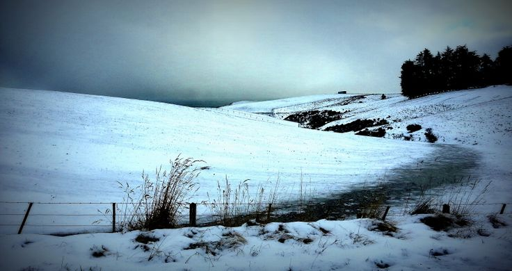 Dunedin Hill, Winter Morning