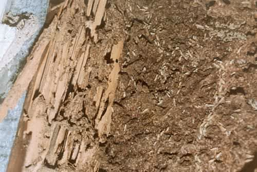 Got Termites??  Make a paint-like consistency of 1 part diatomaceous earth to 1/4 part of good ol' boric acid.  Paint the wood.  Spray crawl spaces, too!
