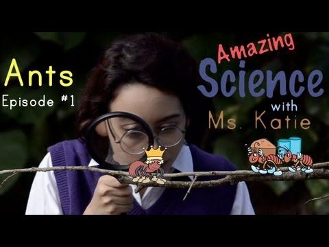 Amazing Ant Facts! Fun Science Facts for children at Amazing Science with Ms. Katie.