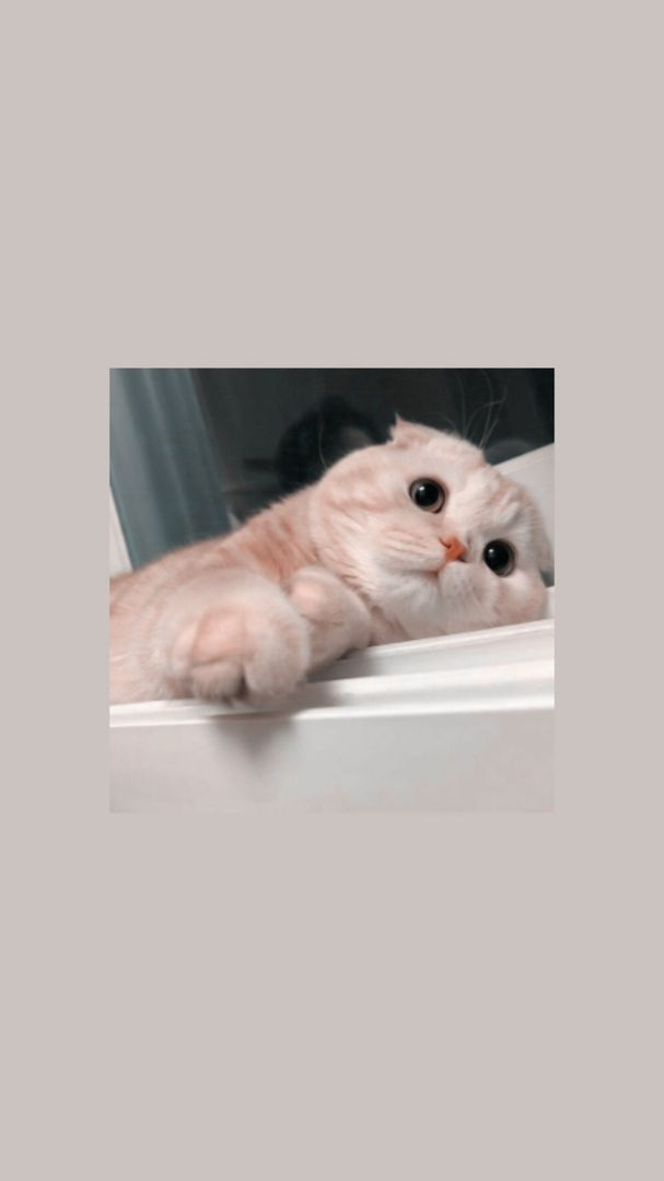Aesthetic Iphone Wallpaper Tumblr Wallpaper Iphone Background Mood Wallpaper Emoji Wallpaper Cartoon Wallpaper C In 2020 Cute Cat Wallpaper Cat Aesthetic Cat Wallpaper