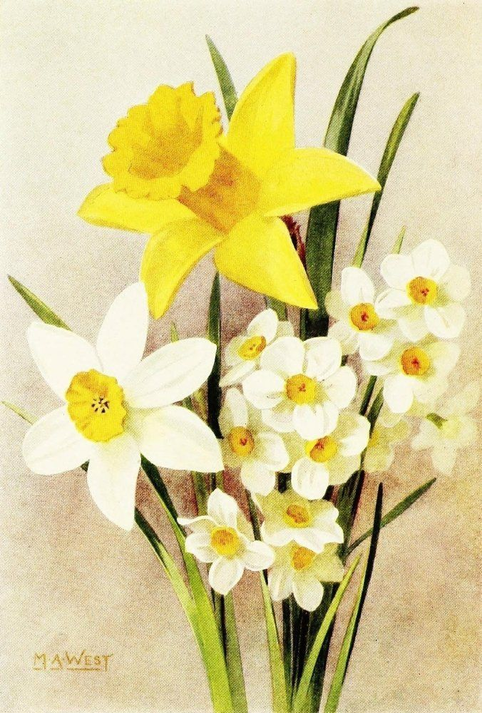 types-of-daffodils