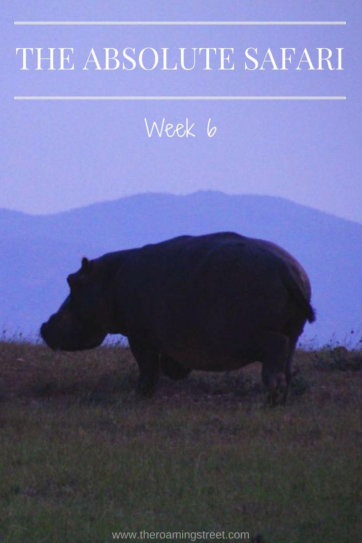 The Absolute Safari Week 6: Malawi, Zambia and Zimbabwe — The Roaming Street