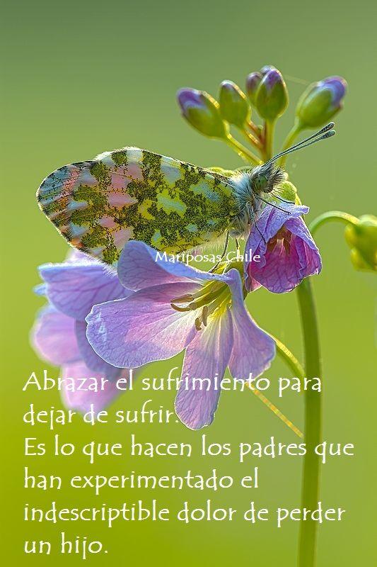 https://www.facebook.com/mariposas.chile
