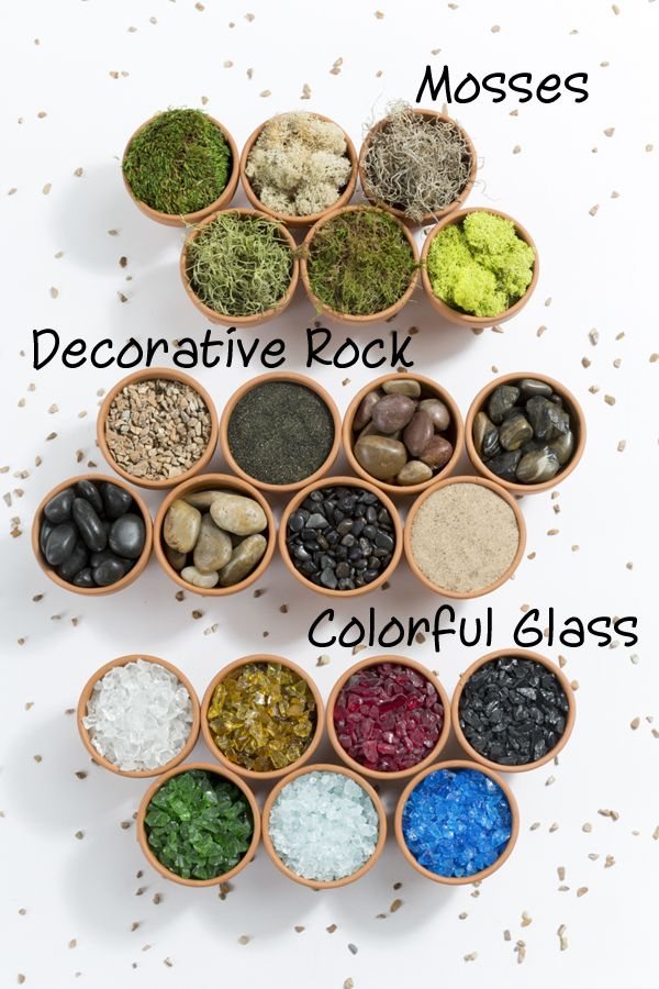 terrarium supplies / Pike Nurseries
