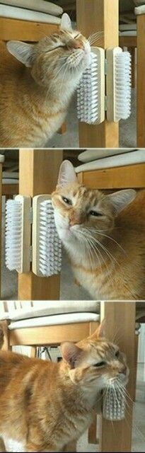 self scratch, 'brush' stations for kitty crew...