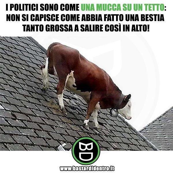 Mucca su un tetto | Immagini divertenti, Divertente, Humor divertente