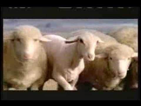 The hilarious Budweiser Sheep Streaker Commericial aired during the Super Bowl XL (2006).  Ad Agency: DDB Chicago