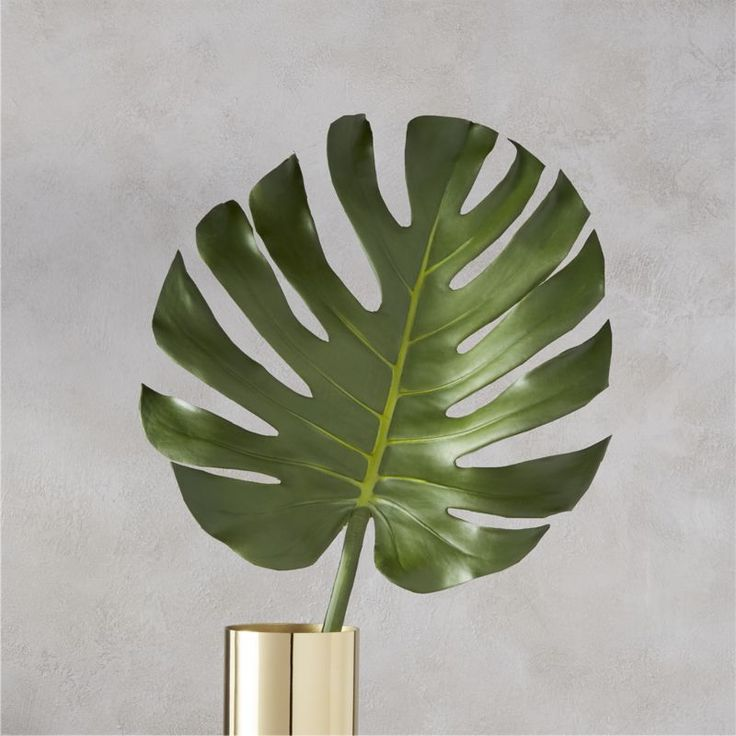 Shop monstera leaf.   Native to the tropical rainforests of Mexico, this faux frond knows no season.  True-to-life details like its glossy green color and heart-shaped leaf, extra large botanical is sized right for centerpieces or floor vases.