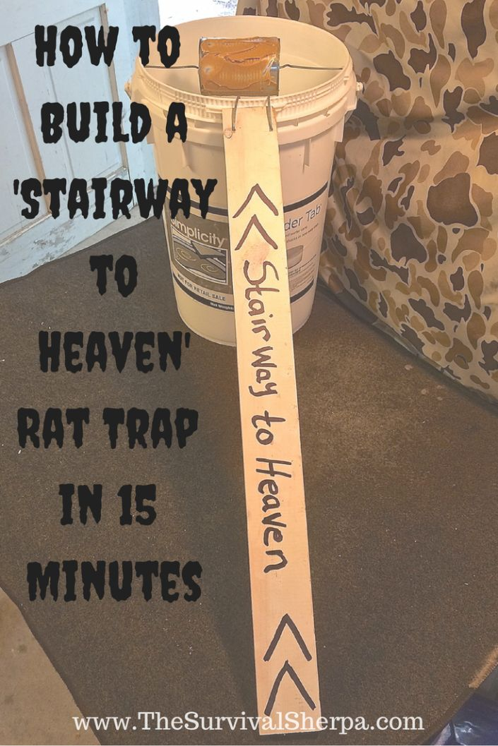 """How to Build a """"Stairway to Heaven"""" Rat Trap in 15 Minutes 