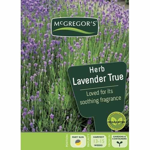 Lavender True  Herb Seed