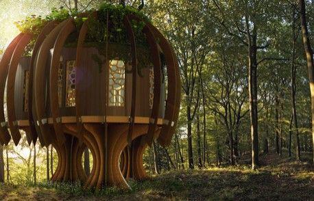 Osobliwy pomysł na biznes... domki na drzewie dla miliarderów