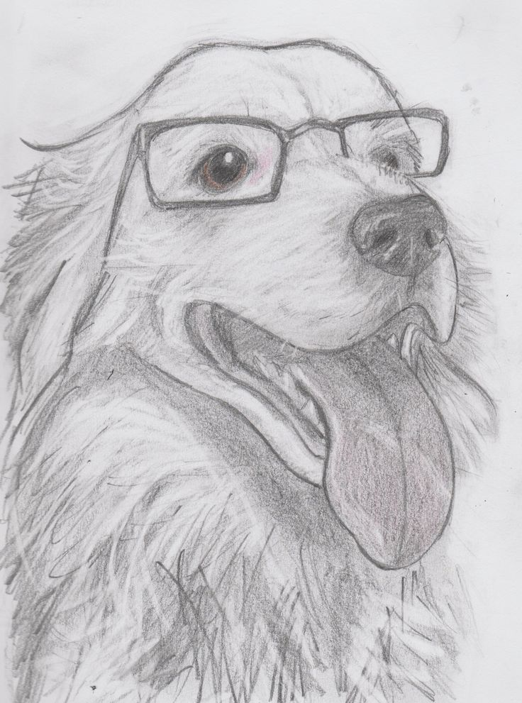 Leo the Border Collie, wearing his mum's reading glasses, pencil drawing, quick drawing project, not so quick drawing, pet portrait, dog, by Jenny Jump, art is a form of magic, copyright Jenny Jump, 2017