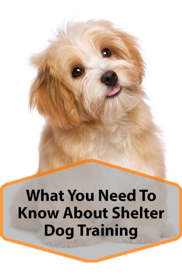 Shelter Dog Training Why You Should Participate Shelter Dogs Dog Training Dogs Puppies