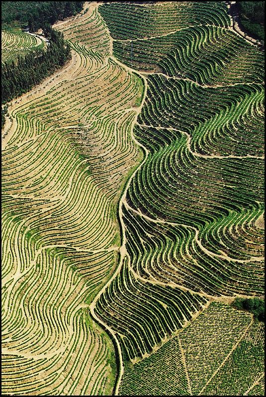 Vale do Douro | Douro Valley #Poertugal #Porto #Dourovalley