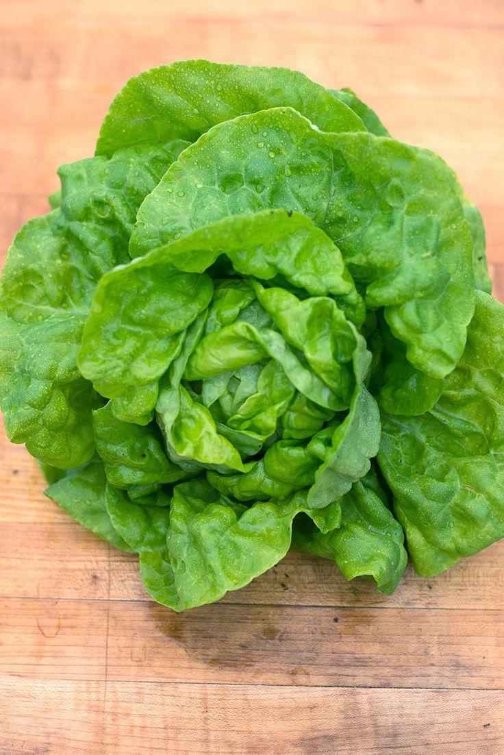 Tennis Ball Lettuce (50 days, Heirloom, Organic) - Pinetree Garden Seeds - Vegetables  - 1