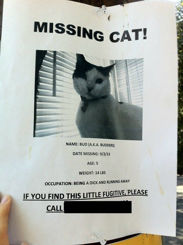 16 Brilliant and Hilarious Missing Cat Posters