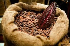 Cacao - 2016 De ISO 34101-serie 'Duurzame en traceerbare cacaobonen' beschrijft onder andere de eisen voor een managementsysteem voor de teelt van cacaobonen, waardoor de productie duurzamer wordt.