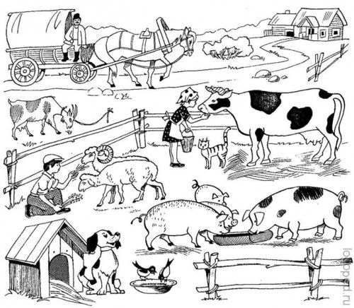 Звуки и картинки домашних животных для детей   Животные ...
