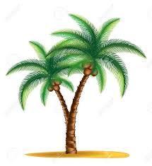 Risultati immagini per palma tropicale