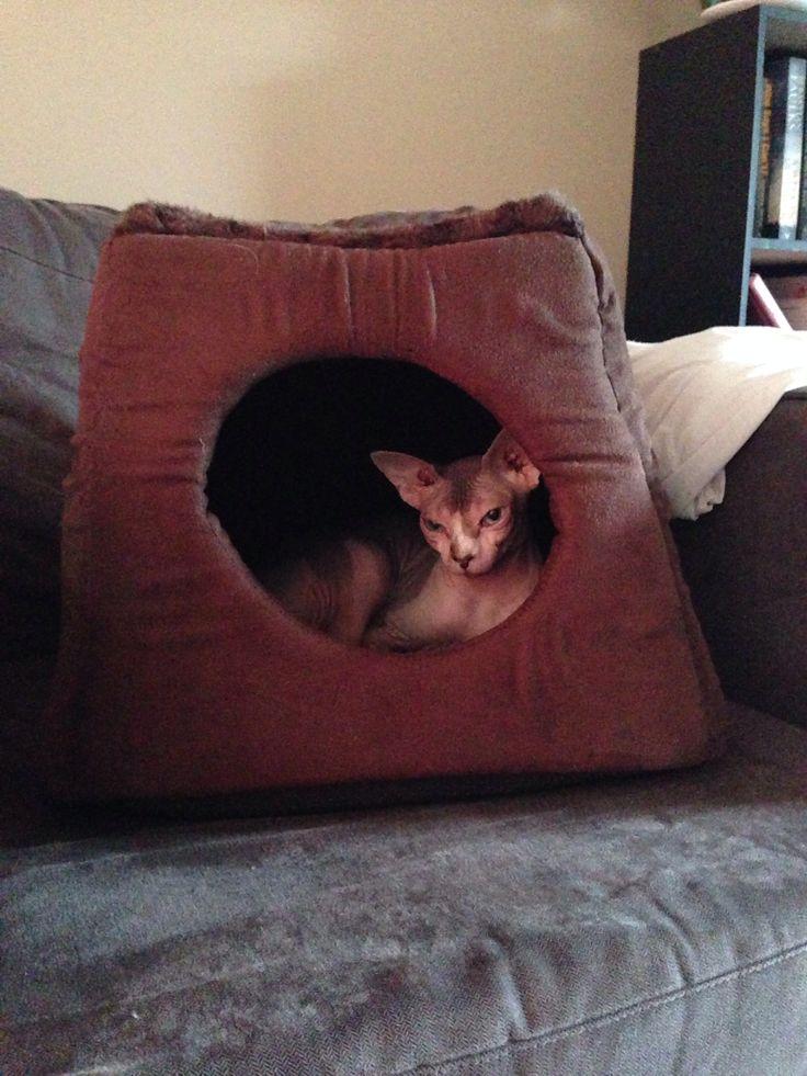 Lulu's cave